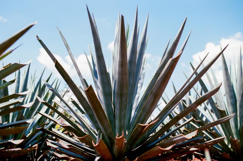 film_photos_of_guanajuato_mexico-40